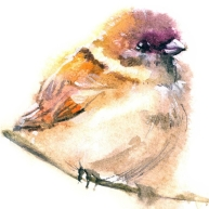 cropped-colorful-chubby-bird